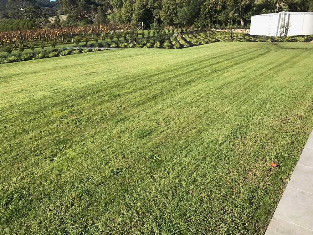 Freshly Mowed Green Lawn by Crown Lawn and Garden Services