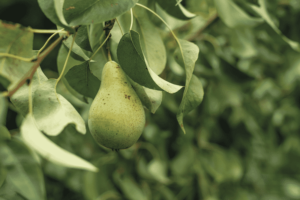 Tending your trees now will prove fruitful later